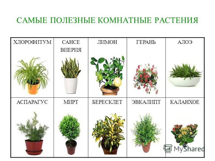 Комнатные цветы и растения, садовые цветы и их названия ...