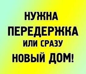 devushki-s-bolshim-vlagalishem