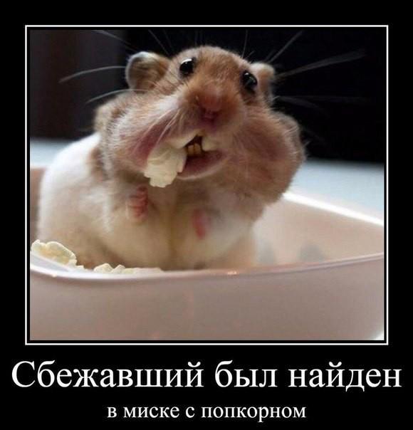 uchebniy-video-po-massazhu-klitora