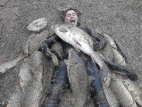 Вызвать ревность мужчины рыбы очень просто.