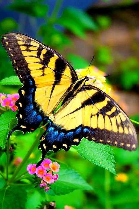 an analysis of the fruits of mother nature and the beauty of butterflies 251 quotes from john keats: and 'i almost wish we were butterflies and liv'd but three fruit, fine weather and a little music played out of doors by.