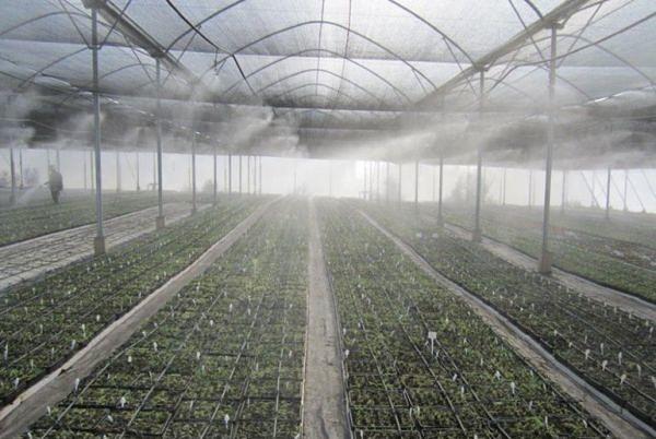 Влажность в теплице вегетарии