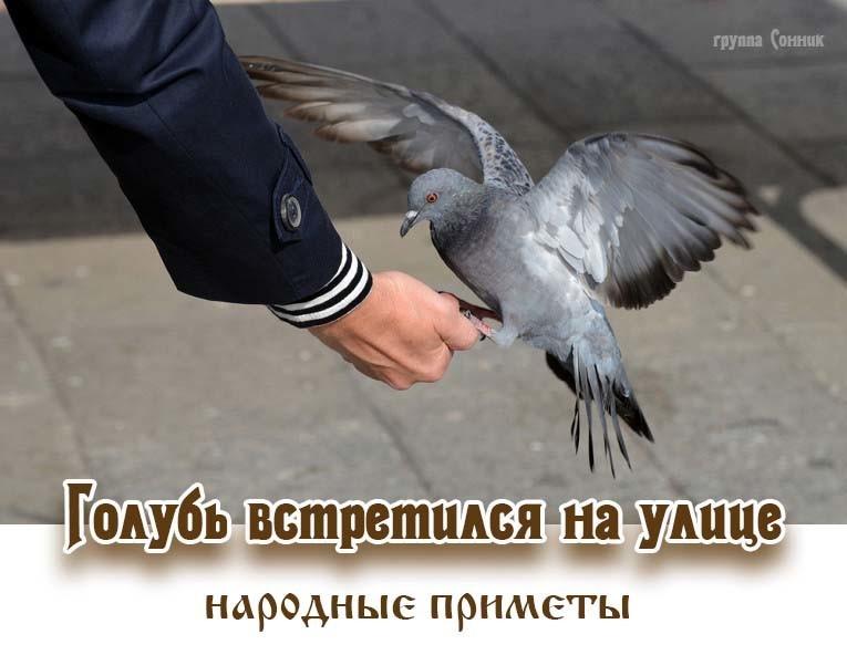 Если птица во сне села на руку, значит, вы очень уверенный в себе человек, который самостоятельно сможет справиться со всеми проблемами.