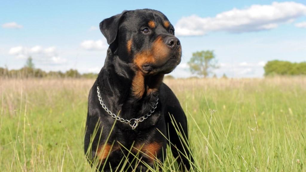 """ООО """"АКАРИ КИАР"""" предлагает корма для собак собственного производства."""