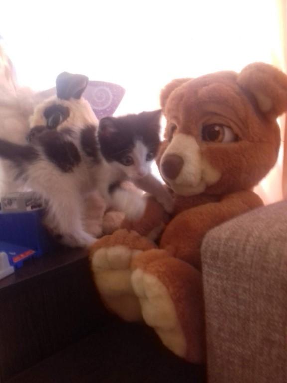 люди помогите пристроить котенка мой кот его привел голодного грязного дикого я его поймала вымыла .моется хорошо ночью не видно не слышно ходит в туалет в тазике  у себя его оставить не могу дети его таскают мучают и кот порой бьёт его звоните кому нужен котенка тел 89521761749