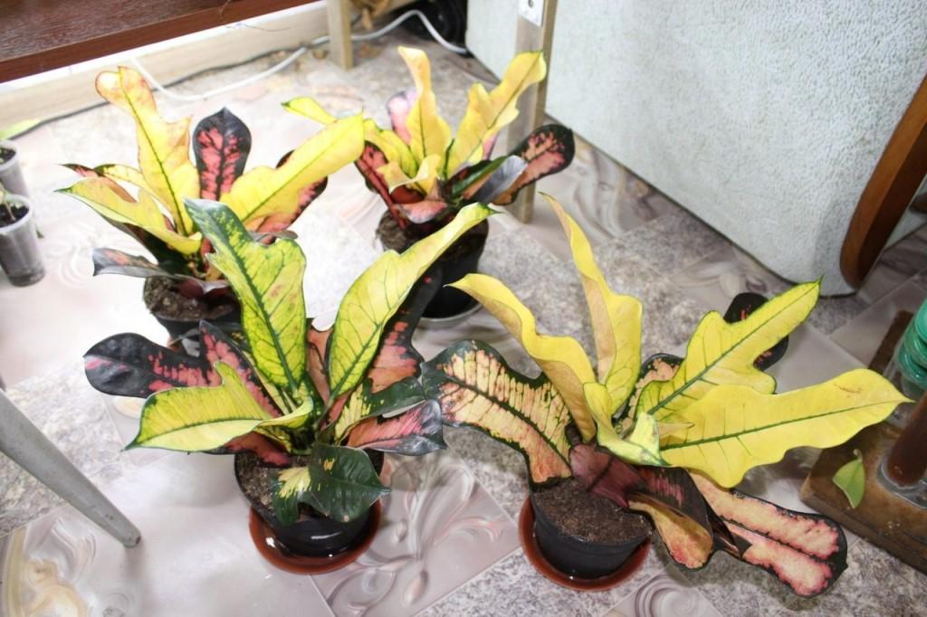 Продаю комнатные цветы , семена , большой выбор.